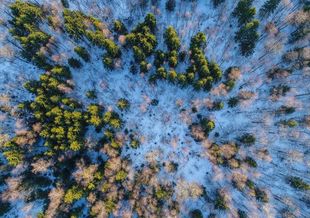 俄西伯利亚非法贩卖林产品的犯罪案件数量出现增长