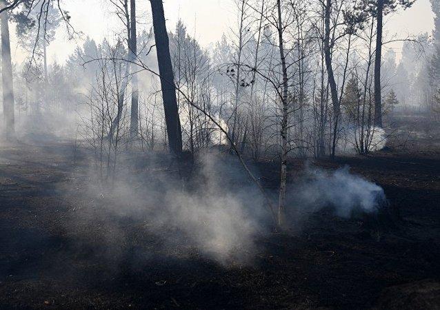 俄远东地区一昼夜扑灭20处林火