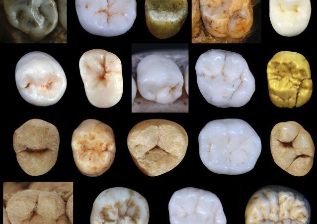 尼安德特人与现代人早在80万年前就已分化