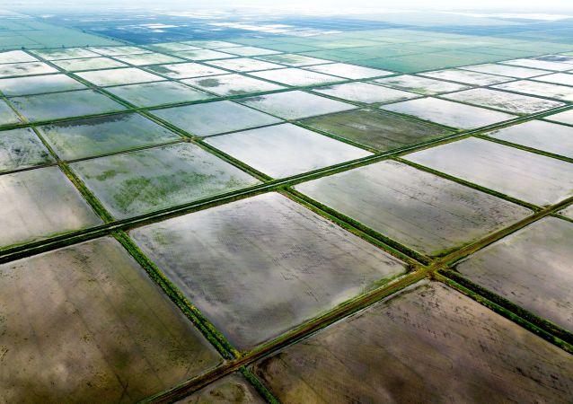 第三代杂交水稻双季稻亩产突破1500公斤