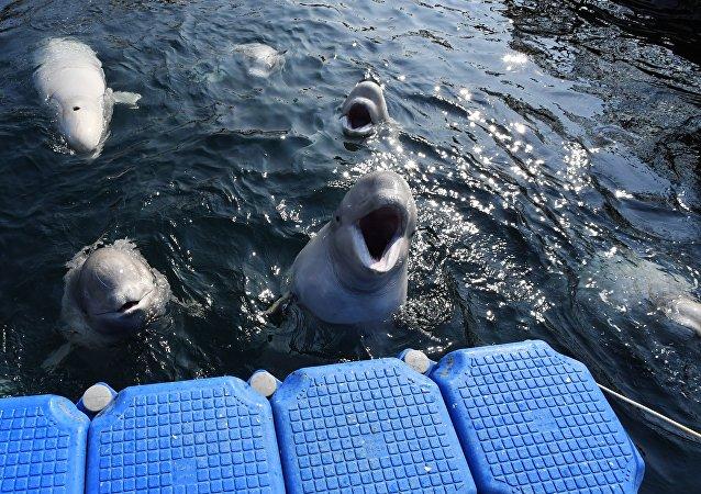 """俄滨海边疆区""""鲸鱼监狱""""制造者已支付罚款6500万卢布"""