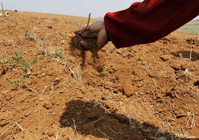 朝鲜最近4年来的严重旱灾正造成新的灾难