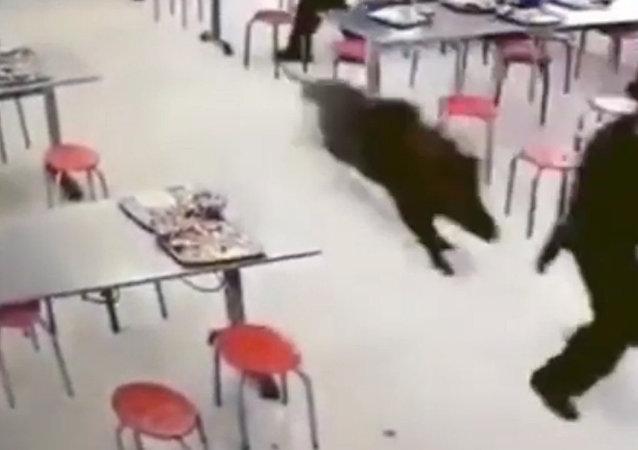 野猪大闹中国工厂食堂