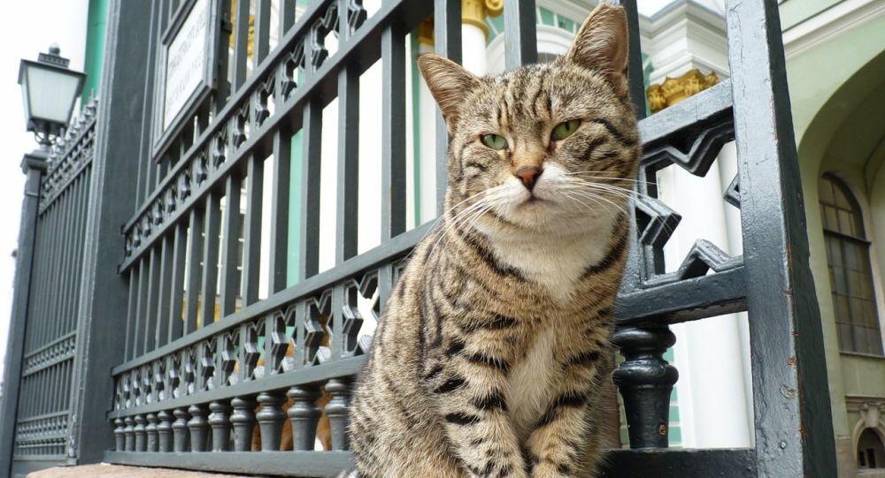 法国爱猫人士将部分遗产留给冬宫猫