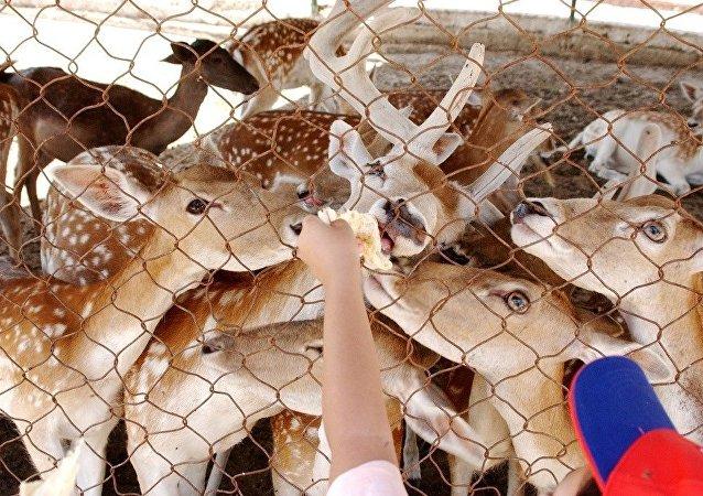 日本奈良市一头死去的鹿胃中有大约4公斤的塑料袋