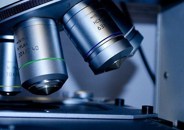 俄罗斯科学家在使用人体活细胞开展镍钛材料生物相容性实验