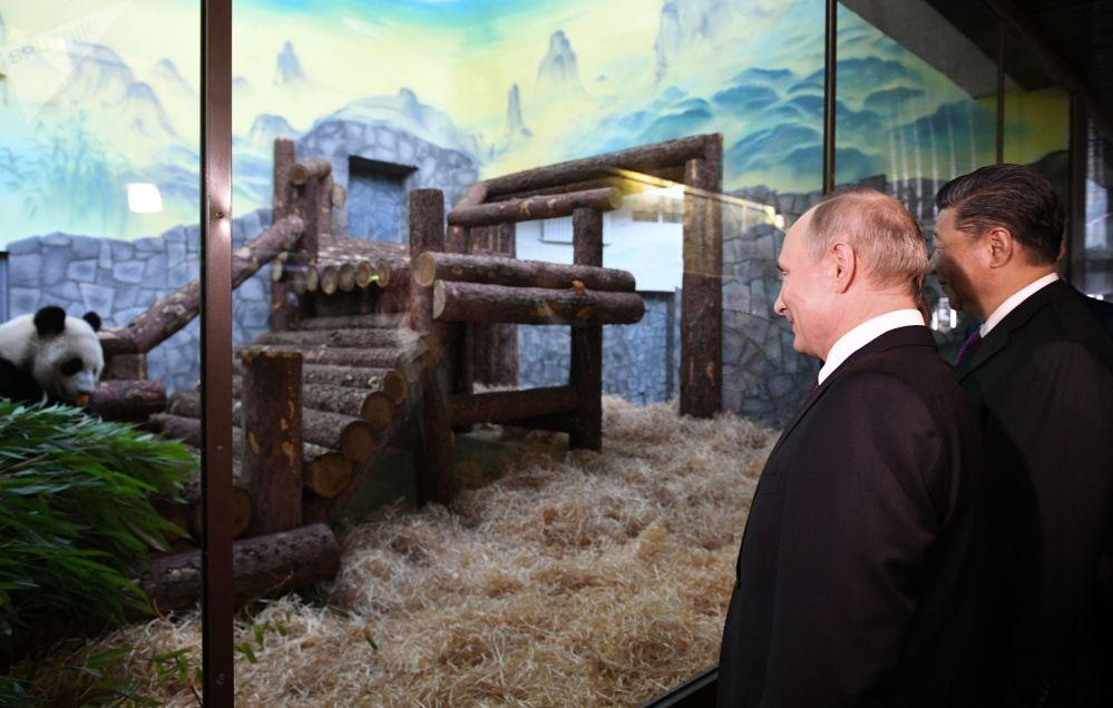 大熊猫亮相莫斯科动物园