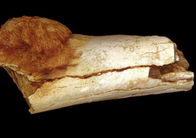 科学家们在埃塞俄比亚发现古猿人的遗骸