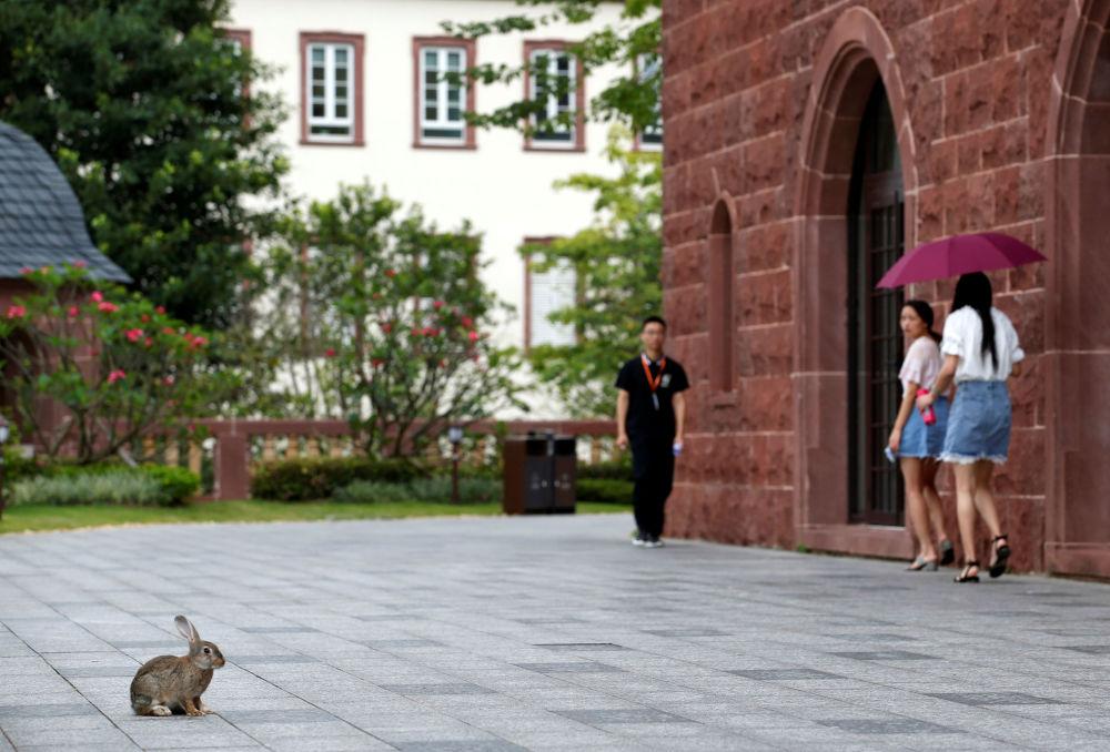 华为办公大楼院子里的兔子,中国东莞