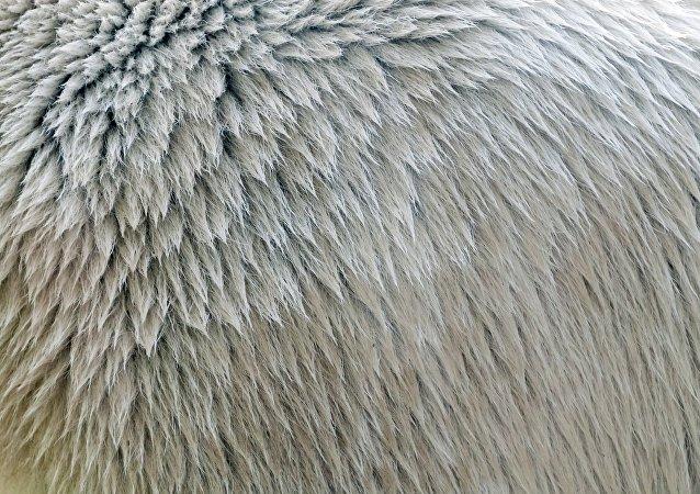新型仿生隔热材料结构类似北极熊毛发