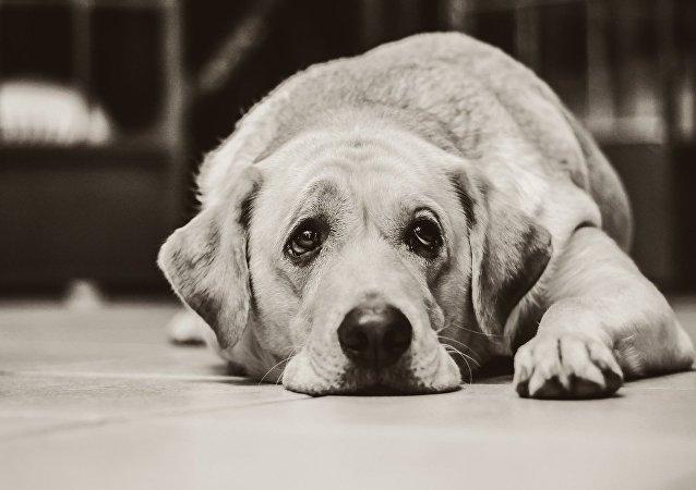 狗的温柔导致女主人截肢