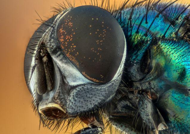 生物学家指出家蝇的危险性