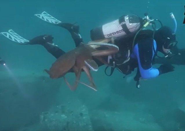 一名潜水员在日本海被巨型章鱼纠缠不休