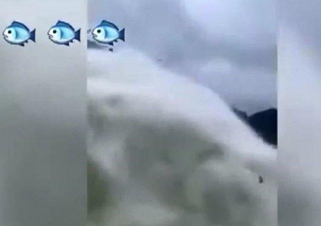 中国千岛湖水涨将鱼抛到空中