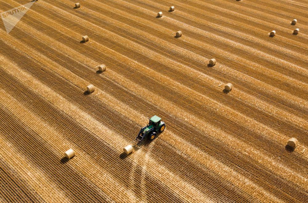 在克拉斯诺达尔边疆区的田野里准备干草卷