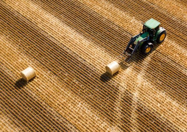 今年截至目前阿尔泰粮食总产量400万吨