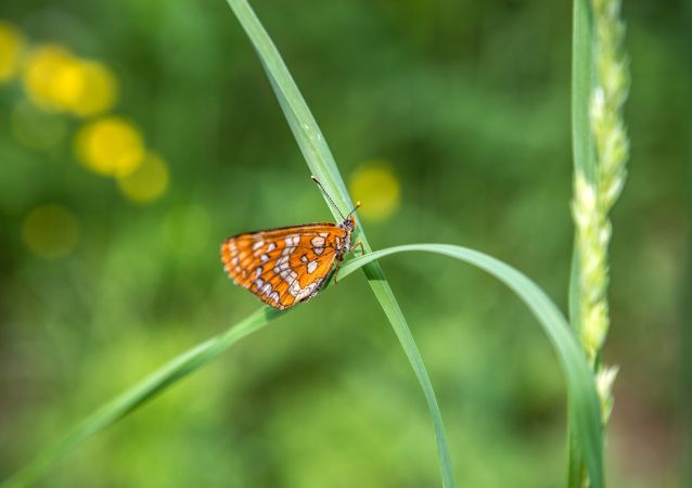 全球陆地昆虫数量呈下降趋势