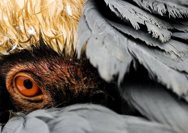 中国黄(渤)海候鸟栖息地入选世遗名录 世遗总数增至54处