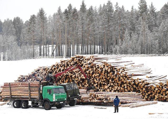 世界自然基金会:俄太空监视系统帮助远东地区专家查明非法砍伐活动