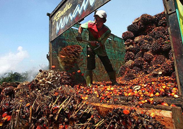 马来西亚表示如欧盟停止进口棕榈油将改从俄罗斯购买飞机