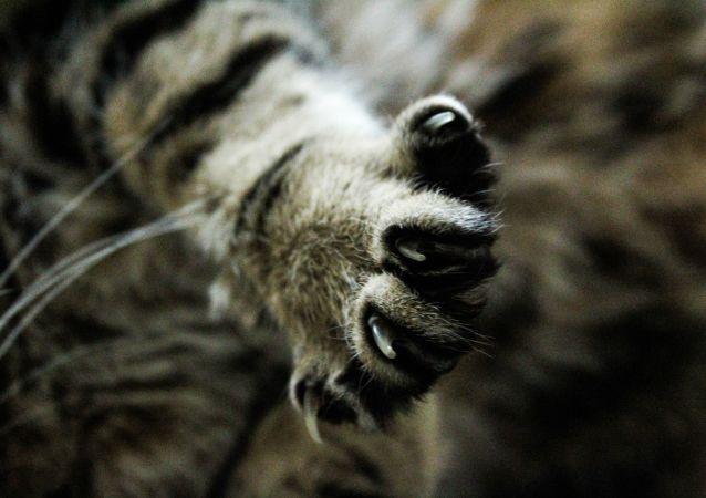 莫斯科发现一只世界上最忧郁的猫