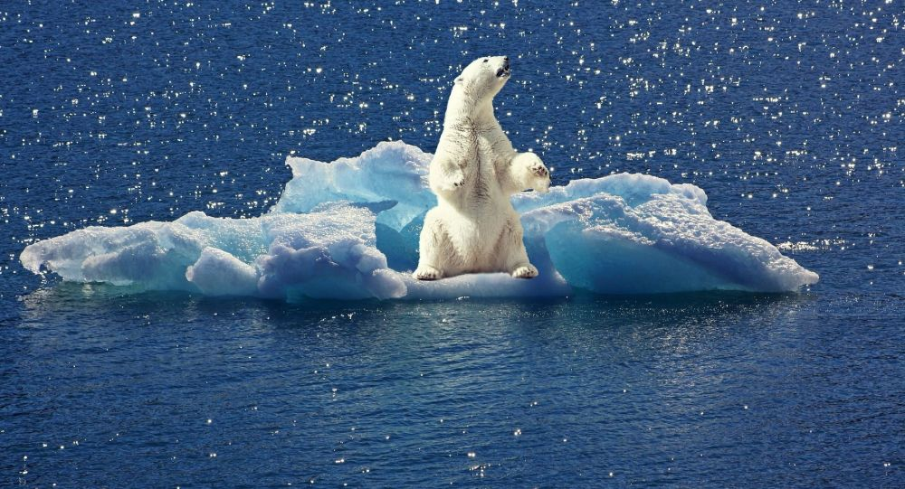 """俄罗斯一只北极熊体侧被人涂上巨大""""T-34""""字样"""