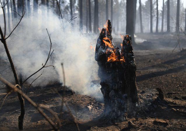 俄7月30日已扑灭30多处森林着火点 还有147处仍在燃烧