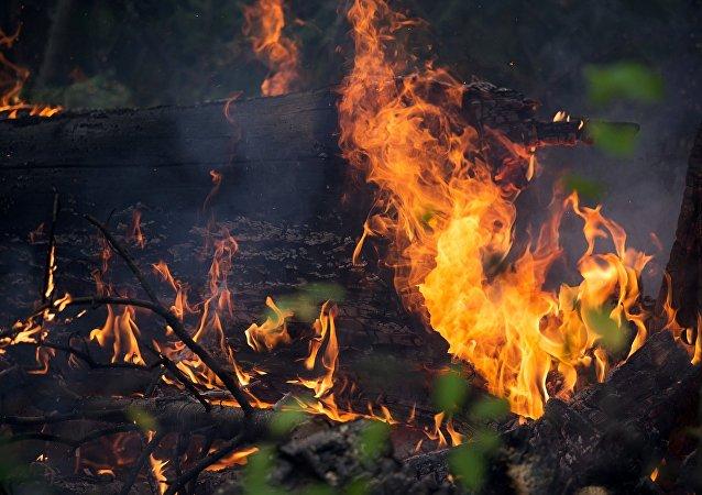 俄总检察院:伊尔库茨克州放火是为了掩盖非法伐木