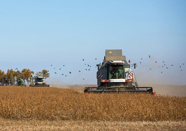 普京:俄希望满足中国对大豆的需求 但未对此种规模做好准备