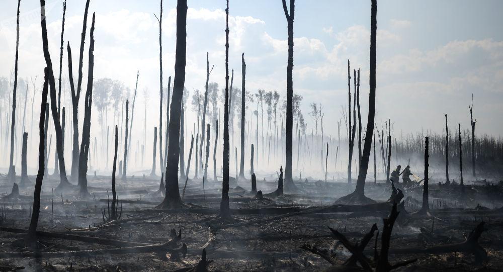 俄罗斯森林火灾面积减少3800公顷