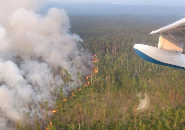 俄总理:森林火灾灾情严重