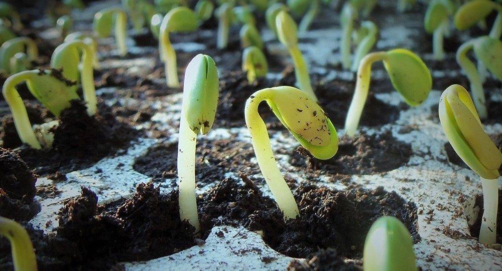 中国农业农村部公布2019年农业转基因生物安全证书批准清单