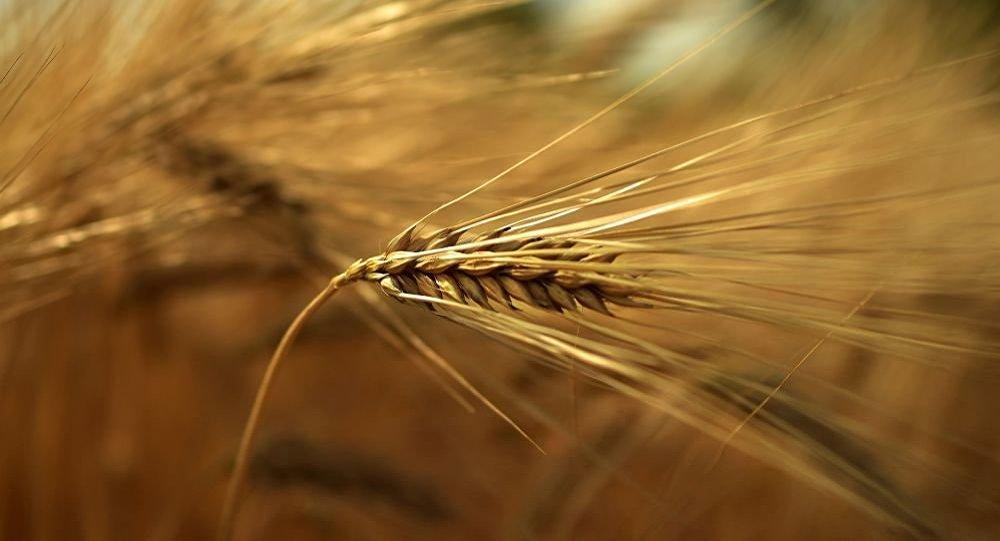 俄将扩大直接对华供应食品的地区名单