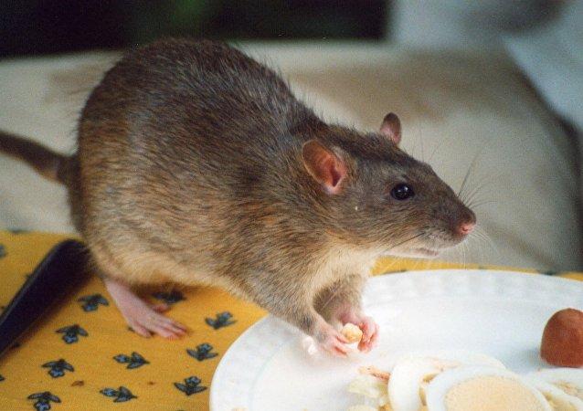 日本食品店为老鼠视频道歉