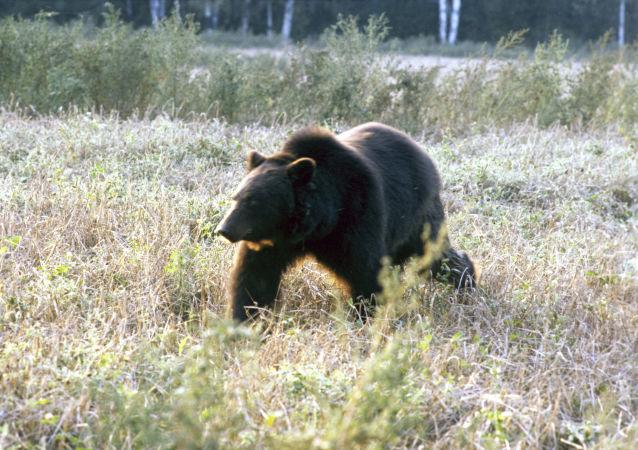 美国一头熊从一家人门前偷走20公斤狗粮