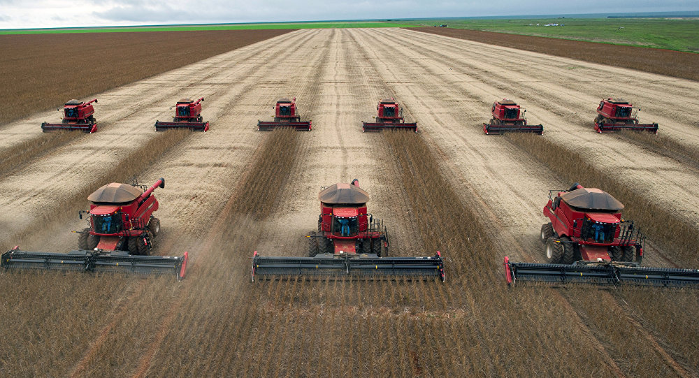 Combine harvesters crop soybeans.