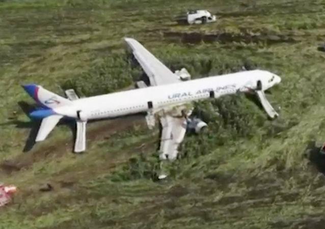 A321起飞前已对莫斯科州机场跑道实施驱鸟检查
