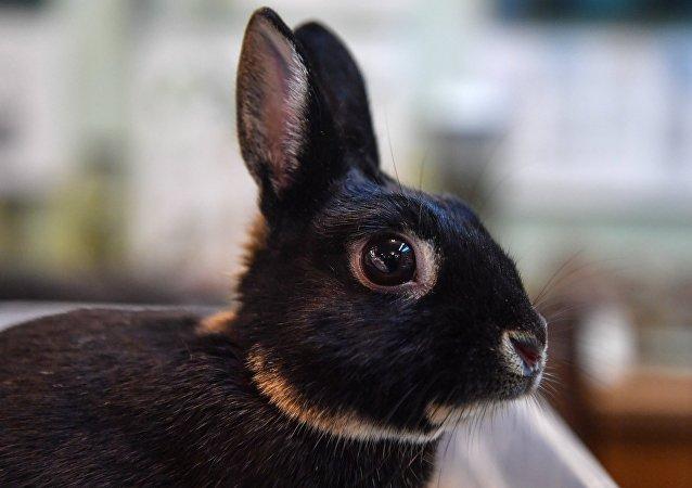 乌鸦-兔子的错觉逗乐众网民