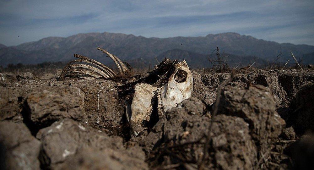 智利遭受几十年来最大的干旱