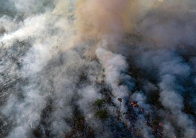 迪卡普里奥否认巴西总统有关资助亚马逊纵火犯的指控
