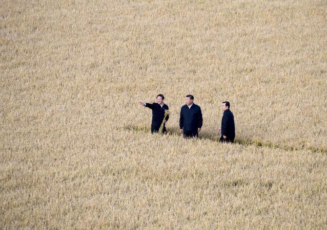中国农业农村部长:中国农村2020年即将全部脱贫