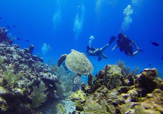 专家在太平洋底发现数千个神秘凹坑