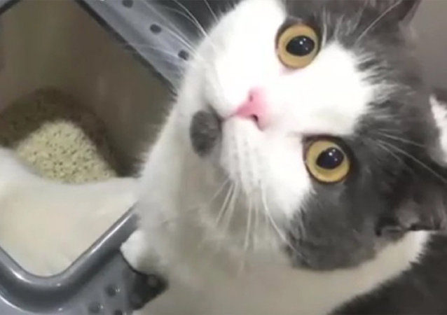 世界上第一只克隆猫