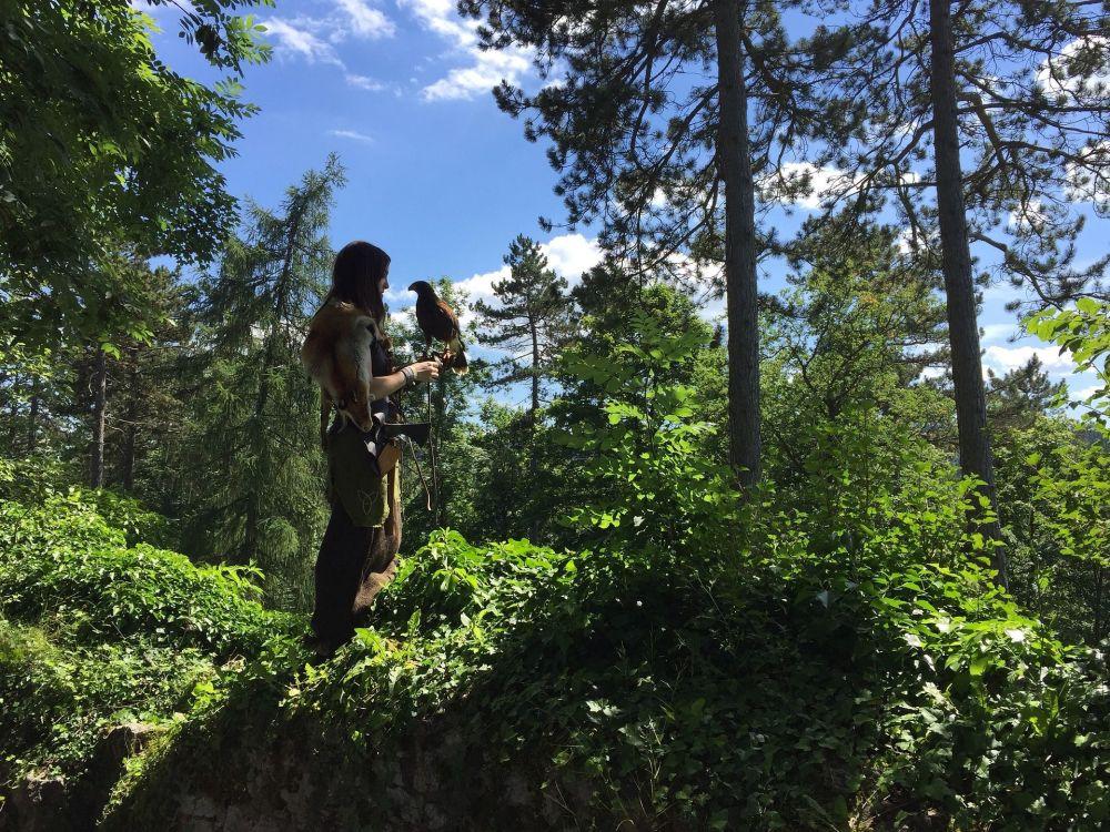 德国图特林根森林中的持鹰女孩