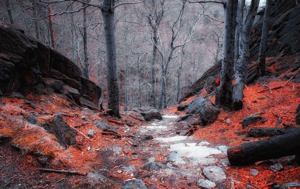 波兰克尔科诺谢山的森林景色