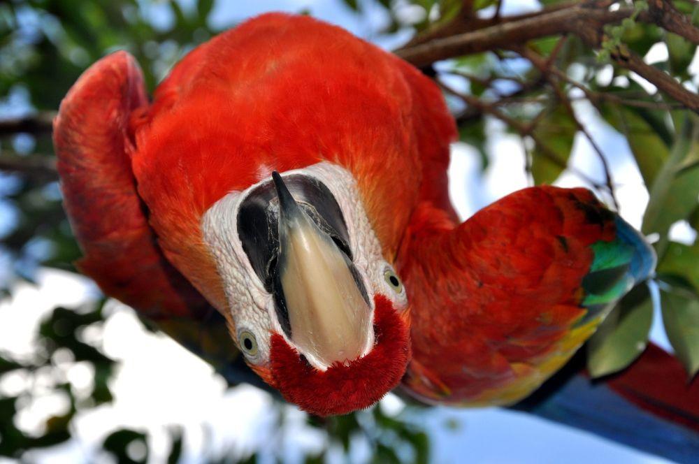 委内瑞拉森林中的鹦鹉