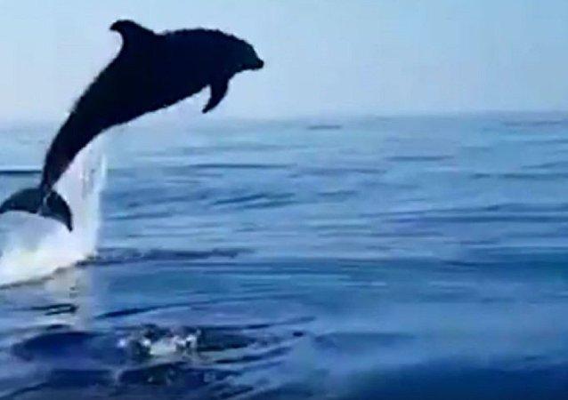海豚感谢渔民救下幼崽