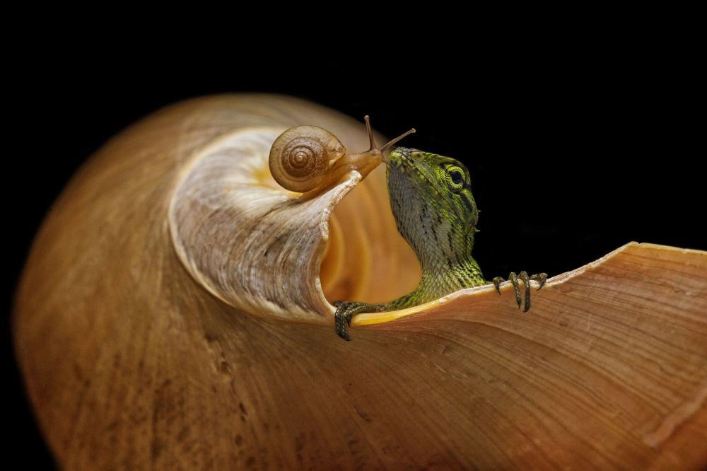 蜥蜴和蜗牛。作者:Andi Halil(印度尼西亚)。