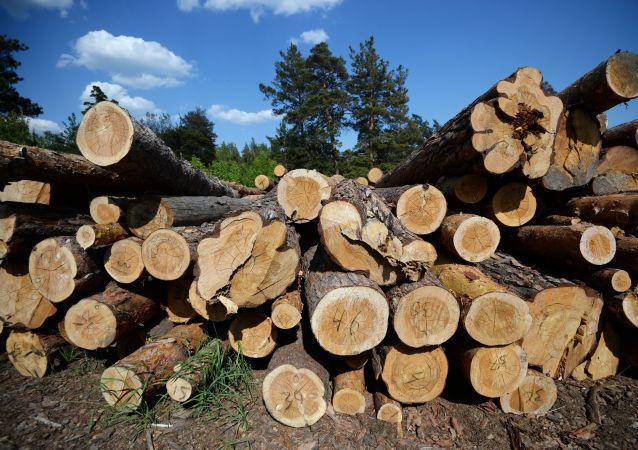 俄海关总署2019年侦办木材走私犯罪案件206起总计案值42亿卢布