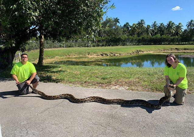 一条重达44公斤蟒蛇被获